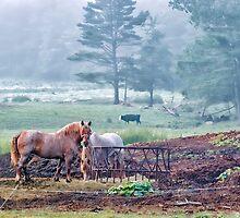 Farm Life at Dawn by Richard Bean
