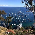 Avalon Bay Catalina Island by swylie
