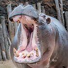 Hungry Hippo by Ray Warren