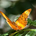 Orange Butterfly by Ray Warren