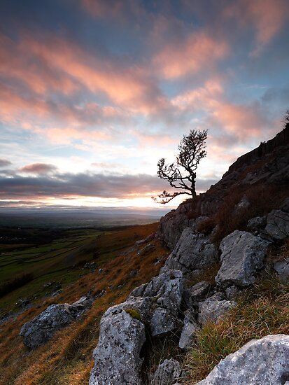 Twistleton Tree, Ingleton, North Yorkshire by PaulBradley