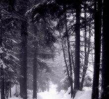 Winter Woods by ChocChipCookie
