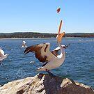 Pelican series #1 by Elisabeth Dubois