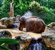 Elephants & Hippos by Ray Warren