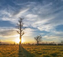 Into the Sun by JasonLStephens