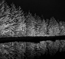 Reflecting Trees by fotohebden