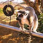 Athens Zoo - Lemur by Vitta