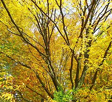 Golden yellow autumn by Brevis