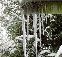 icicle on gutter by Brevis