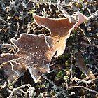 Icy Leaf by LittleAsArt