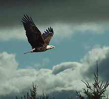 Scenic Flight by Thomas Young