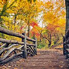 Central Park Autumn - Wooden Bridge and Fall Foliage - New York City by Vivienne Gucwa