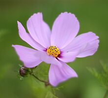 Pink Flower by sophie-baxter