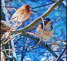 Finch And Blue Jay - California Winter Day by moorezart