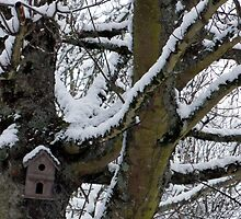 Winter Residence for the birds by Franglais