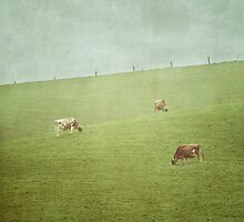 Grazing cows by Jill Ferry
