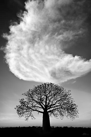 Sky Tree by Mieke Boynton