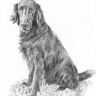 Retriever drawing by Mike Theuer