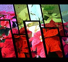 Mixed color Poinsettias 3 Tinted 1 by Christopher Johnson