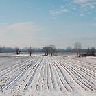Snowy Field by jojobob