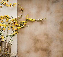 Wall flowers by Guy  Berresford