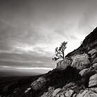 Twistleton Tree (B&W), Ingleton, North Yorkshire by PaulBradley