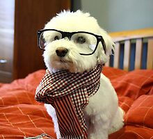 Hipster Dog by NicCaridi