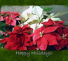 Mixed color Poinsettias 3 Happy Holidays P1F5 by Christopher Johnson