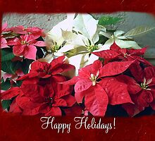 Mixed color Poinsettias 3 Happy Holidays P5F1 by Christopher Johnson