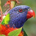 Rainbow Lorikeet Profile by jozi1