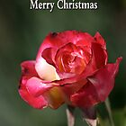 merry christmas- red-white-rose by Joy Watson