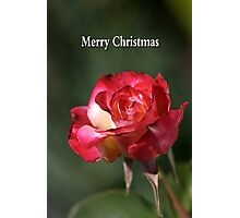 merry christmas- red-white-rose Photographic Print