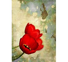 Lovely Red Flowers With Moody Grunge Canvas Texture and Stains Photographic Print