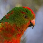 Australian King Parrot by kim wormald