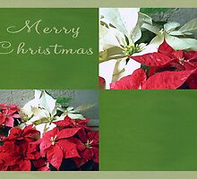 Mixed color Poinsettias 3 Merry Christmas Q5F1 by Christopher Johnson