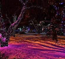 Christmas in the Park by Linda Bianic