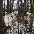 Hill's Lake by WildestArt