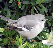 MOCKINGBIRD (2) by pepperandy
