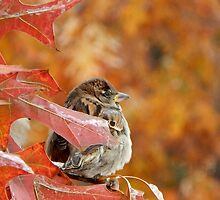 SMALL SPARROW by pepperandy