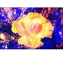 Eerie Amethyst Yellow Poppy Blossom Photographic Print