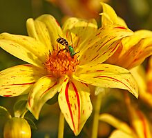 Yellow Flower Green Insect by Gary Horner