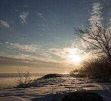 Frosty Grasses, Shrubs and Rocks on the Shore of Lake Ontario in Toronto by Georgia Mizuleva
