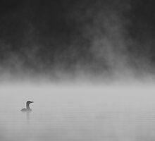Misty Morning B&W by Loon-Images