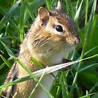 Chipmunk by Martha Medford