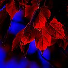 First Touch of Morning - fall autumn leaves red blue glow by Michael Taggart