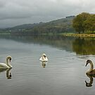 Esthwaite Swans by Jamie  Green