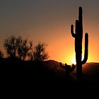 Desert Sunset by Ann  Van Breemen
