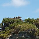 Osprey and Rock Formation by kalaryder