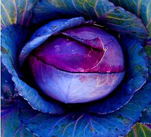 Mmmmmm Cabbage by jphenfrey