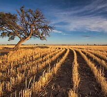 Gold Trail by David Haworth